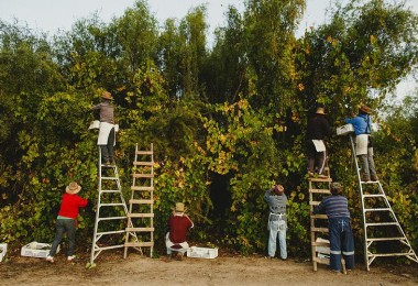 """Convocatoria Concurso Nacional de Diseño de Etiquetas del Vino """"País Salvaje»"""